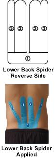 lower_back_spider